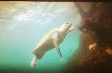 Ma deuxième passion, l'apnée, et bien sûr rencontrer la faune marine