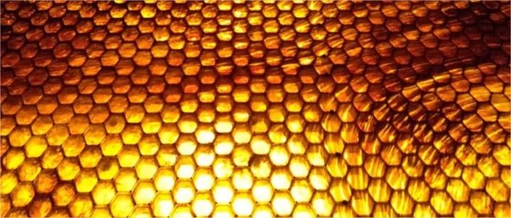 La ruche - création GoodPlanet